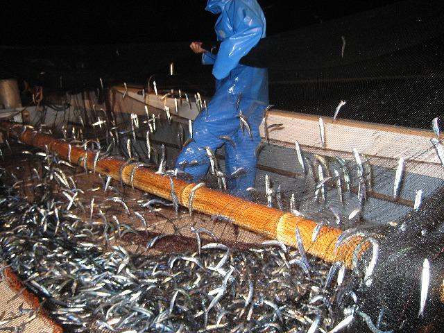 きびなご漁